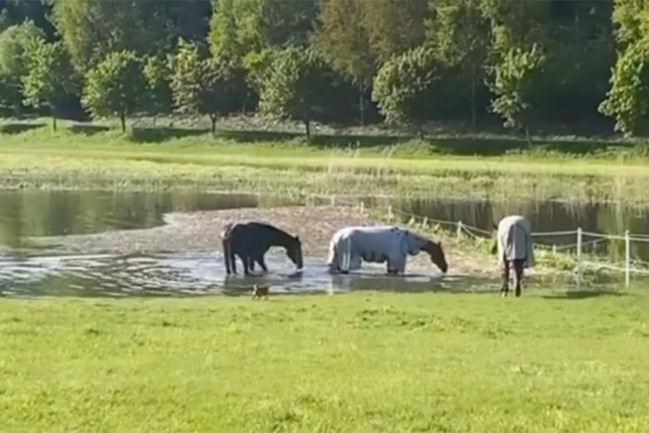 Kolla klippet: Lata dagar för Freskgårds sjöhästar