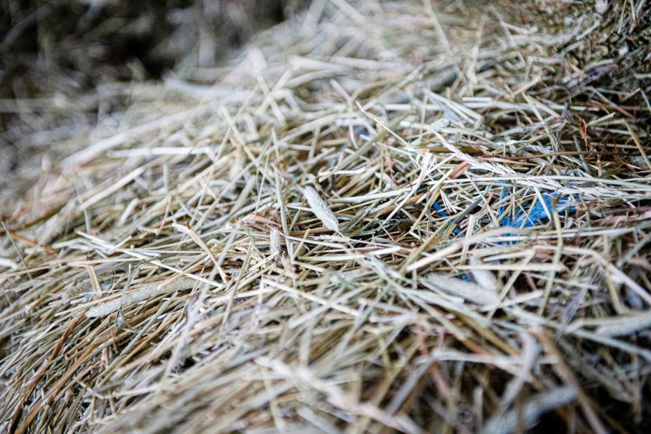 Lär dig läsa analysen av grovfodret