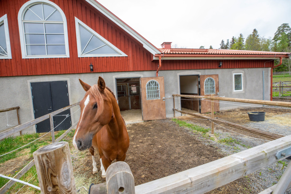 Här går hästarna in och ut som de själva vill