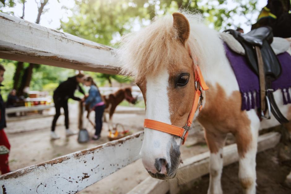 Myggburet virus infekterar hästar i Sverige