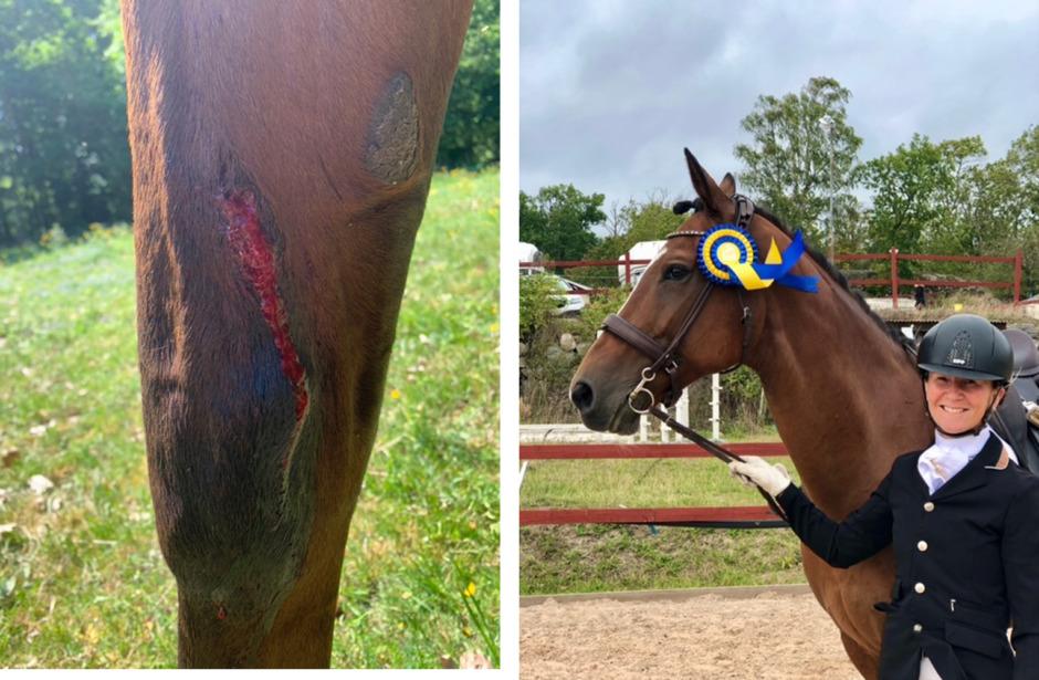 Sarahs häst bröt benet – föll offer för veterinärbristen