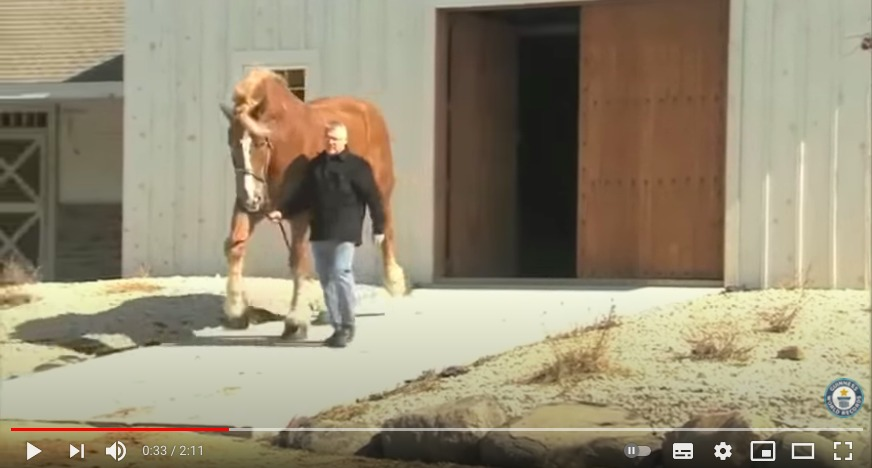 Världens största häst är död