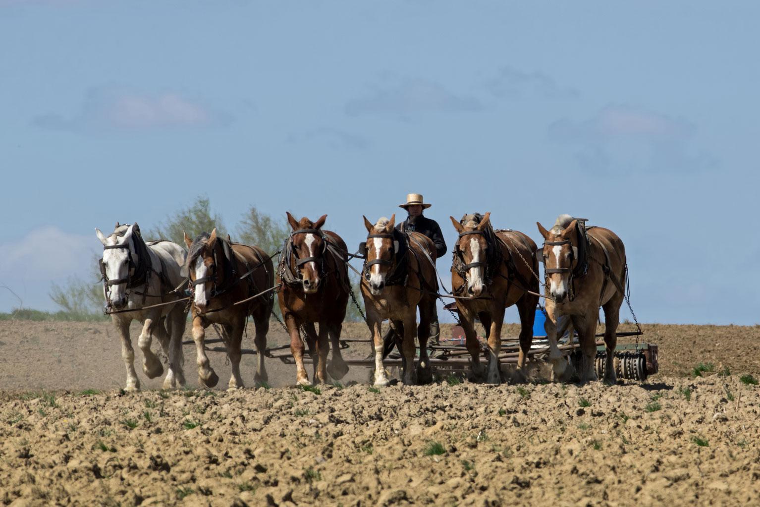 Amish-istock-472592052