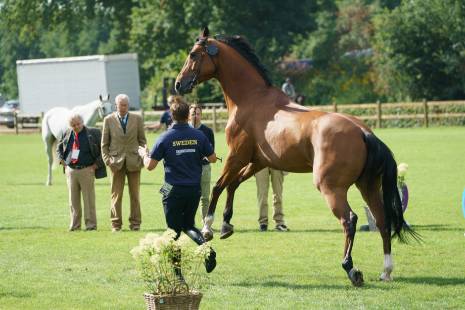 Höga förhoppningar med oprövade mästerskapshästar