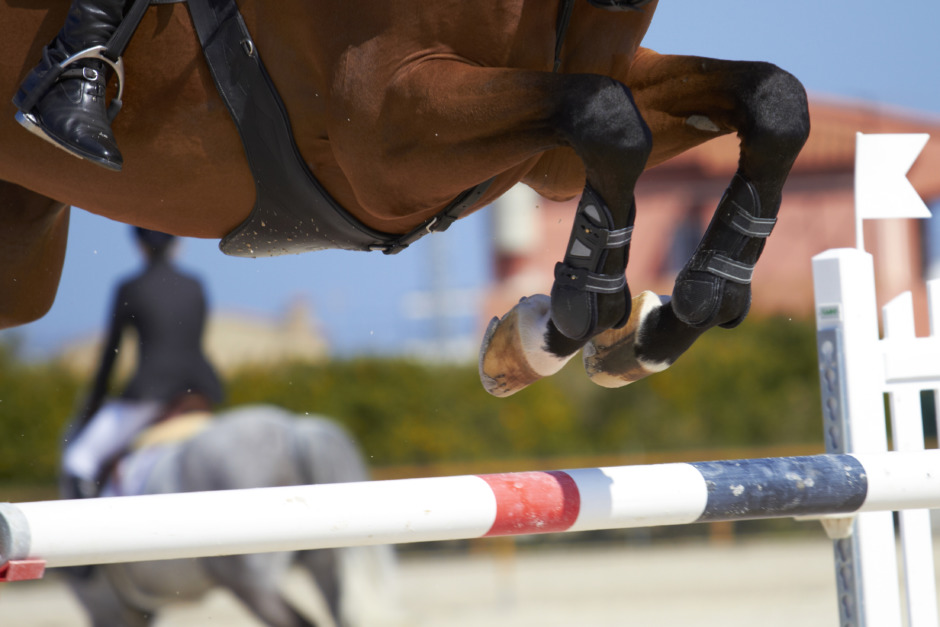 Mästerskapshäst fick avlivas efter rivning
