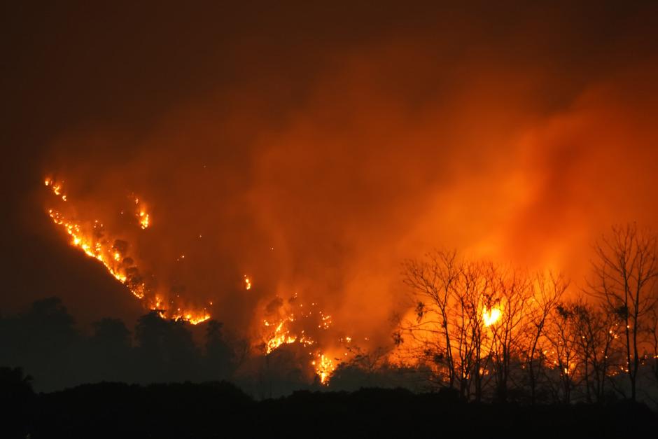 Stor hästgård evakuerad på grund av skogsbrand