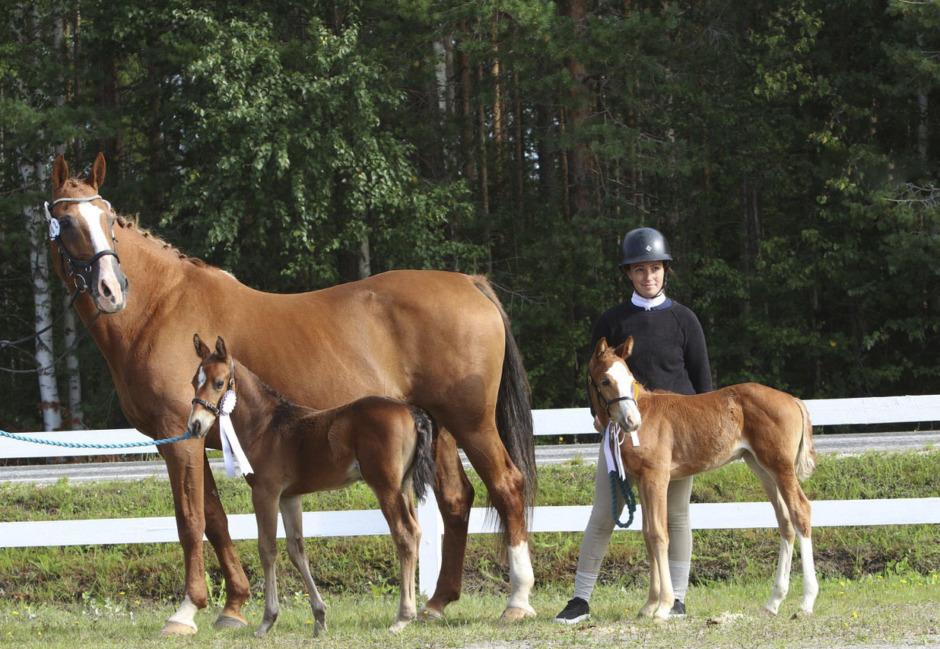 Tvillingföl efter Clever Hill charmade i Vännäs