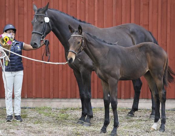 Hoppfölen flest och bäst i Södra Älvsborg