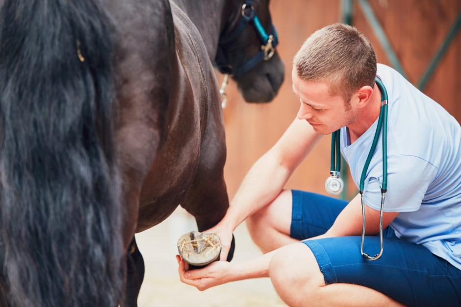 Fler söker veterinärvård – hältor fortfarande vanligast