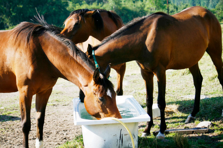 Hästägare – så tacklar du vattenbristen