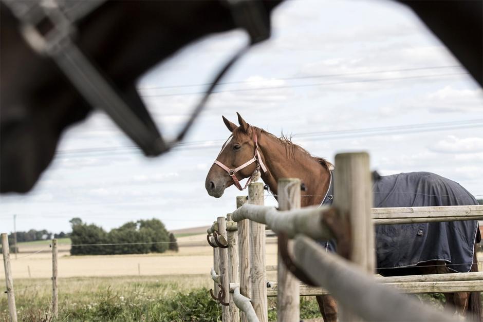 Dumpad häst – kronofogden kan hjälpa vid avhysning