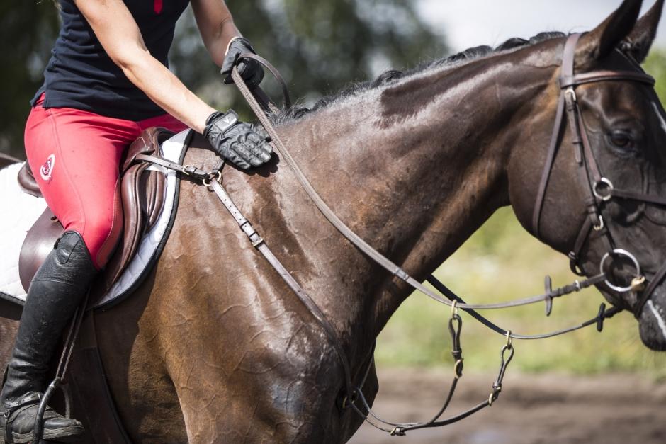 Olika sätt att ge hästen beröm