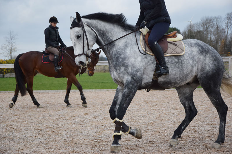 Forskningsnyheter: Sätt hästarna i kondition igen