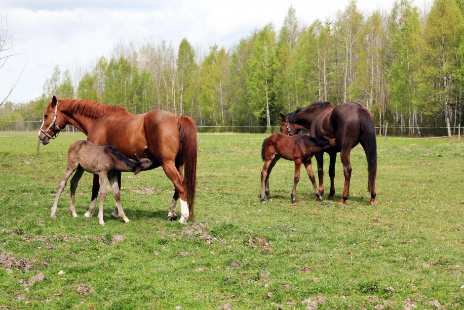 Skydda din häst i sommarvärmen