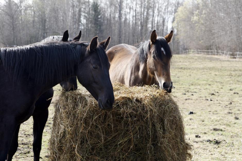 Hästsverige lanserar nytt foderstatsprogram