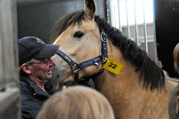 Omhändertagna hästar såldes