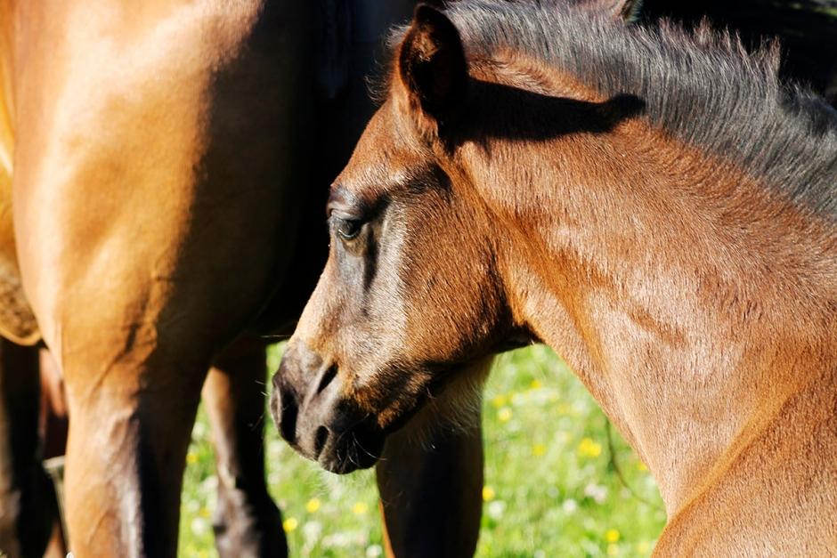 Tarmfloran lika viktig för hästar som för människor