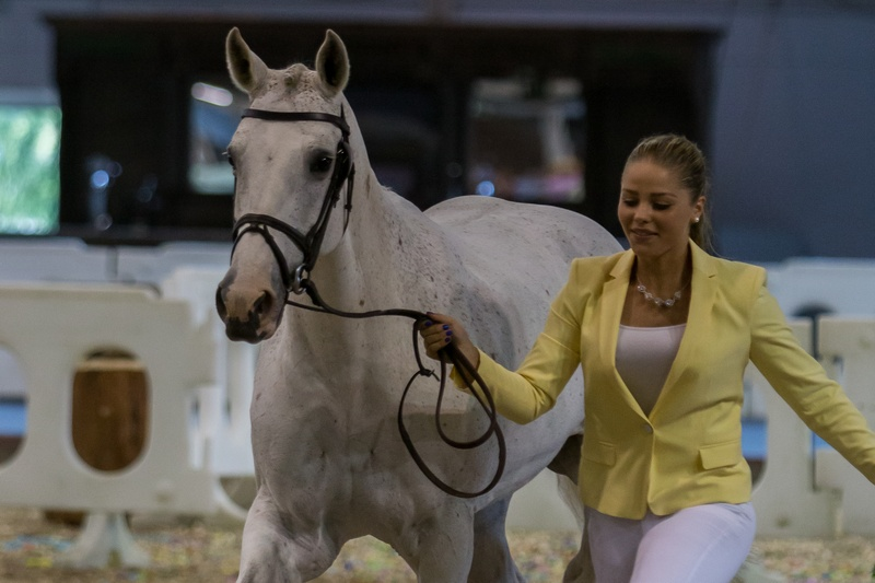 Dressyr inleder ponny-EM