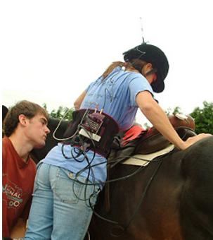 Ryttarens sadelval inte alltid bäst för hästen