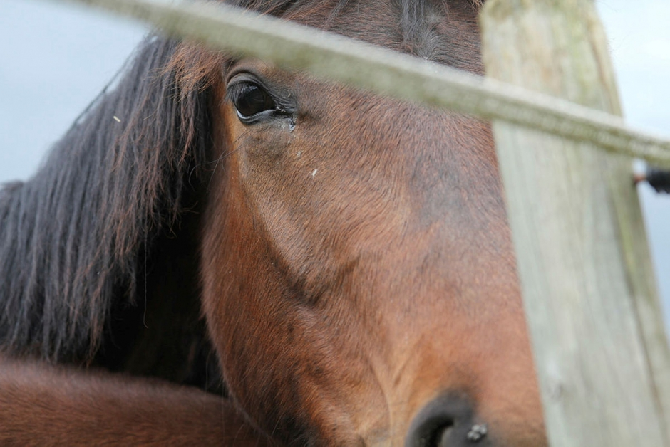 lugnande foder till häst