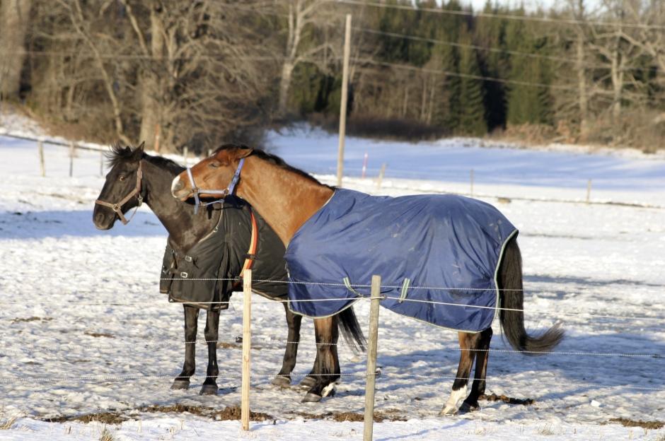 när ska hästen ha täcke