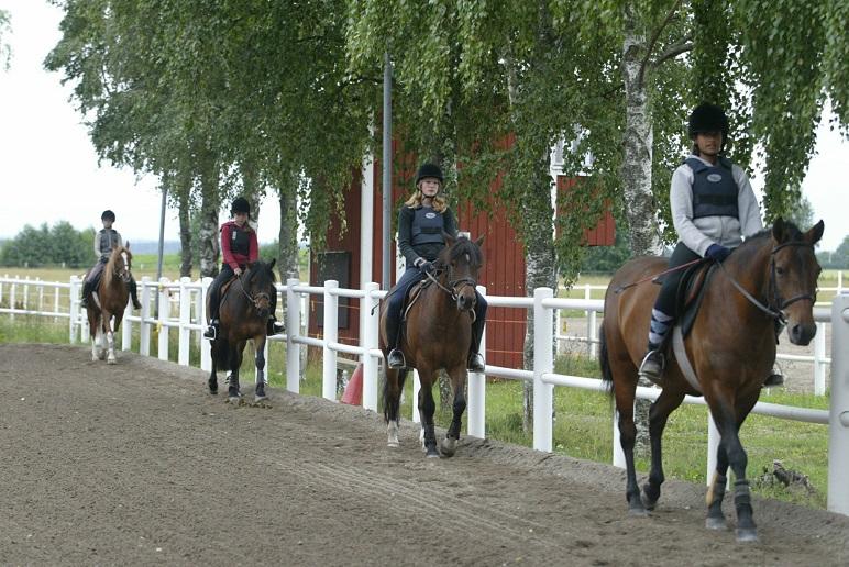 Kvarkasmittad ridskolehäst i Stockholm