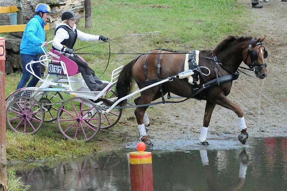 Kuskar till Falsterbo Horse Show