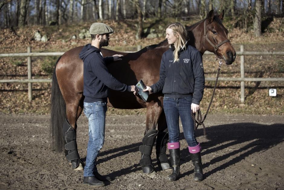 Tips inför hästköpet