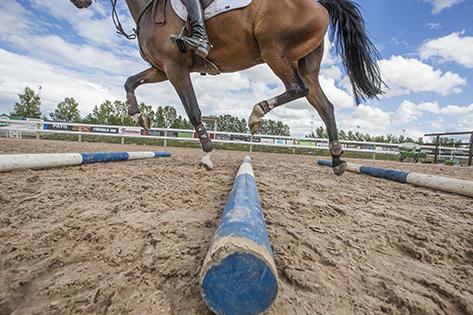 Europeiskt förbundssamarbete för tävlingshästens hälsa