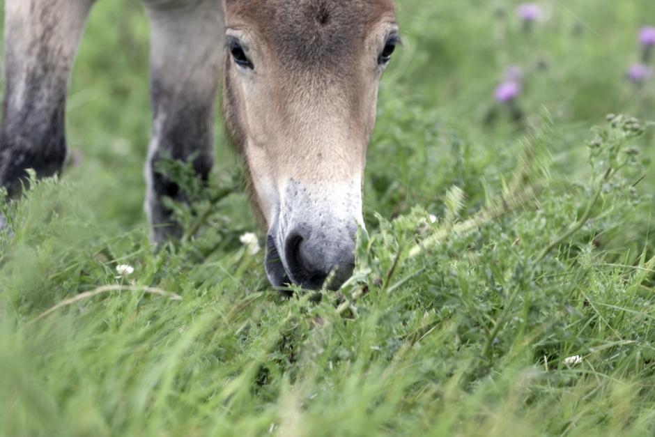 Hästar får inte vara ute nog – cirkus hotas med vite