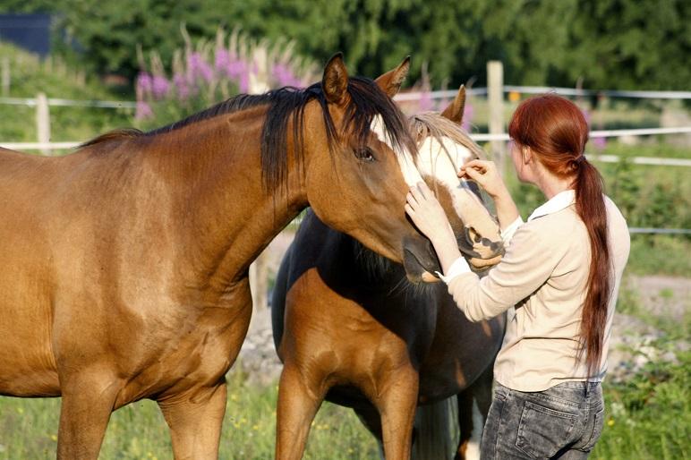 Så pratar hästar med människor