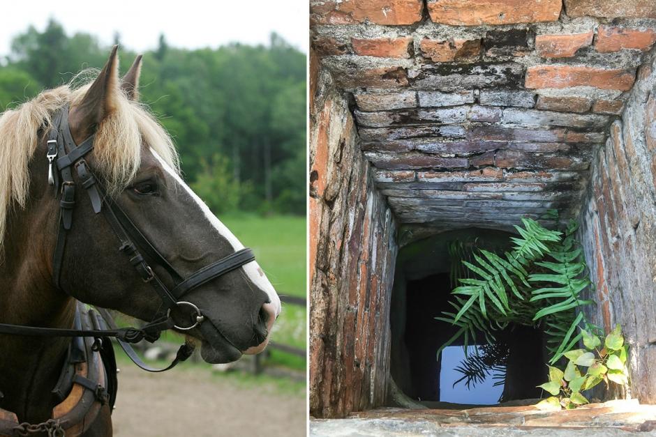 Häst räddad ur brunn