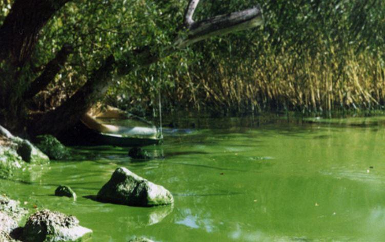 Häst dog efter att ha druckit sjövatten