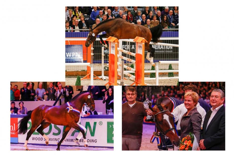 Kickstart för KWPN Stallion Show
