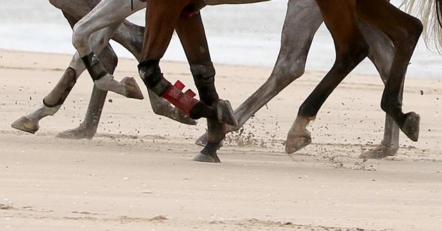 En häst avlivad efter distansritten