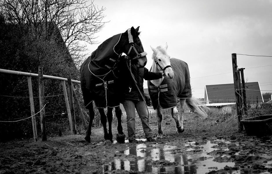Tog två hästar ur hagen – döms till dagsböter