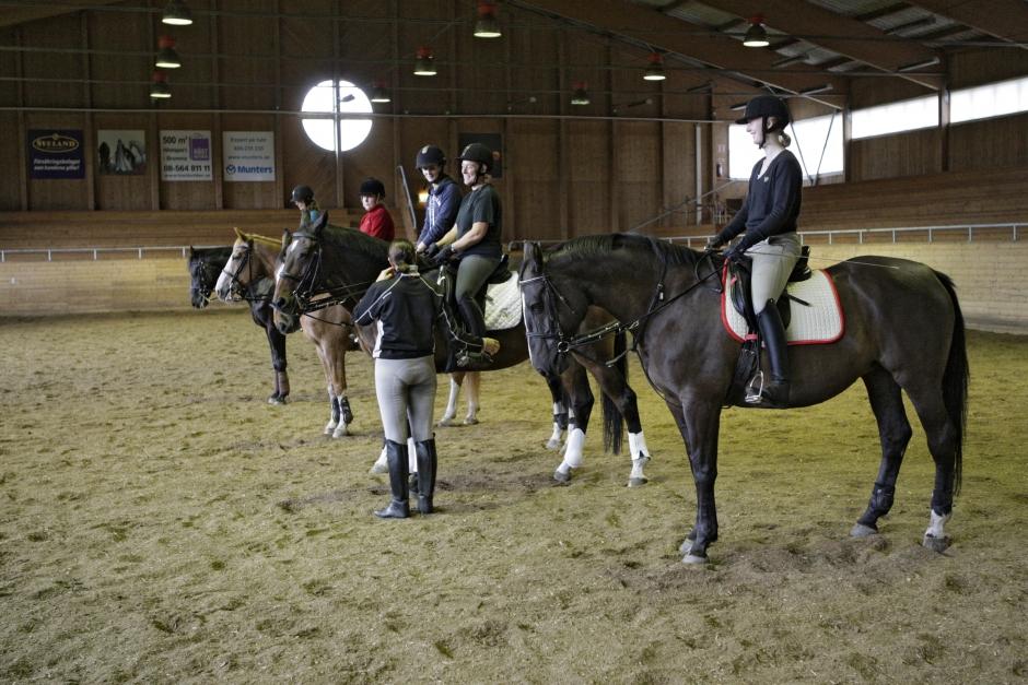 Hästsektorn tar plats i kompetensråd för gröna näringar