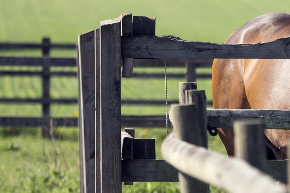 Djurskyddsinspektör får inte ha kvar sin hästverksamhet
