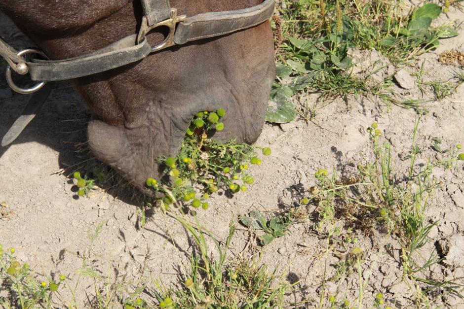 Foderhjälpen samordnar djurägares jakt på foder