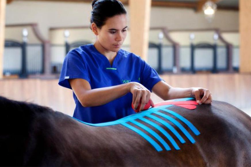Tejp hjälper hästen träna musklerna
