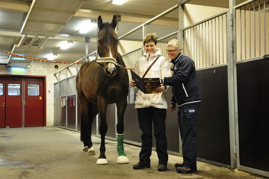 Stallchef-tjänst inrättas på hästsjukhus