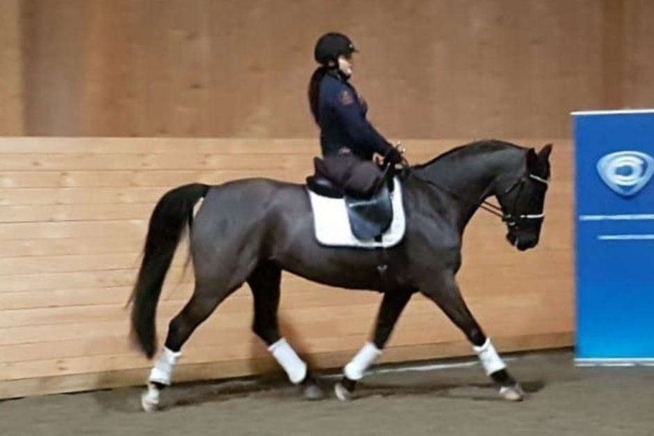 Felicia Grimmenhag sponsras med ny häst
