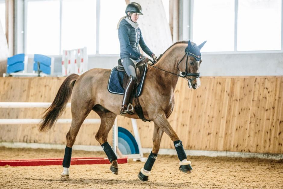 Träna hästen till mental avspänning