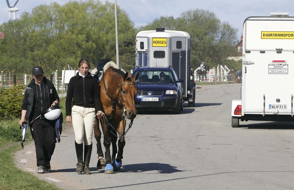 Färre hästar i trafikolyckor