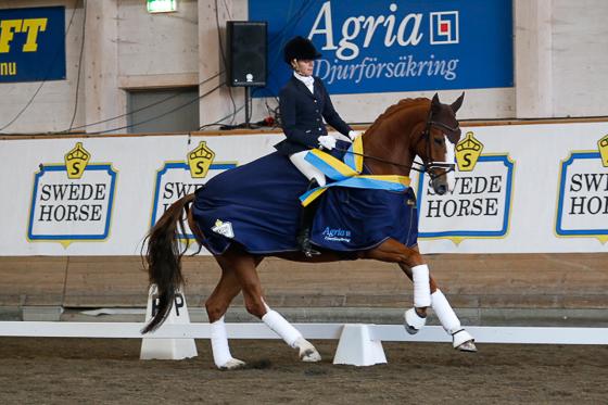 Sex unga hästar till SIHS