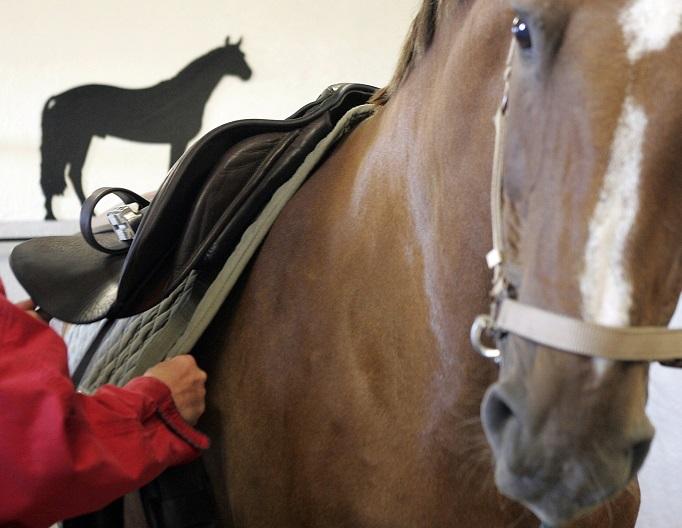 Stressade hästar bytesrättens baksida