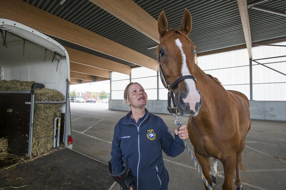 Första hästarna på plats i Göteborg – häng med på en tur