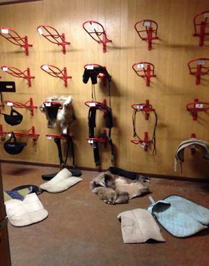 Hästar utsläppta vid inbrott
