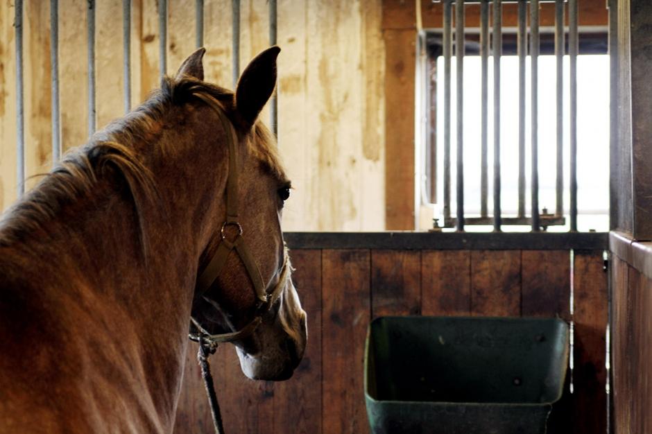 """Forskare: """"Risk att hästar blir lidande"""""""
