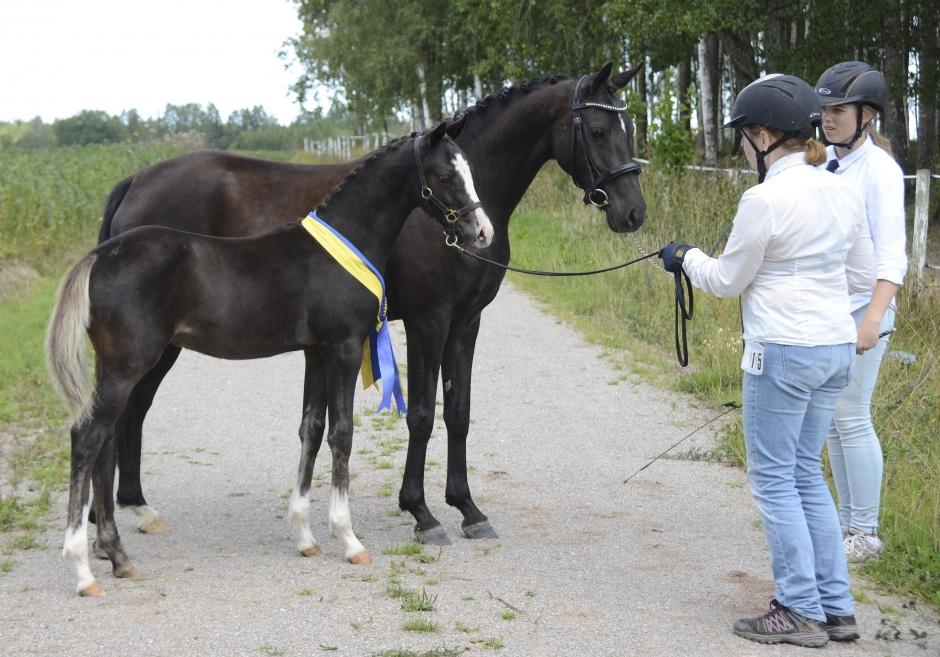 Ponnyföl blev SWB-champion
